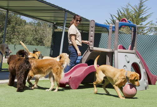 Dogs in an outdoor play area